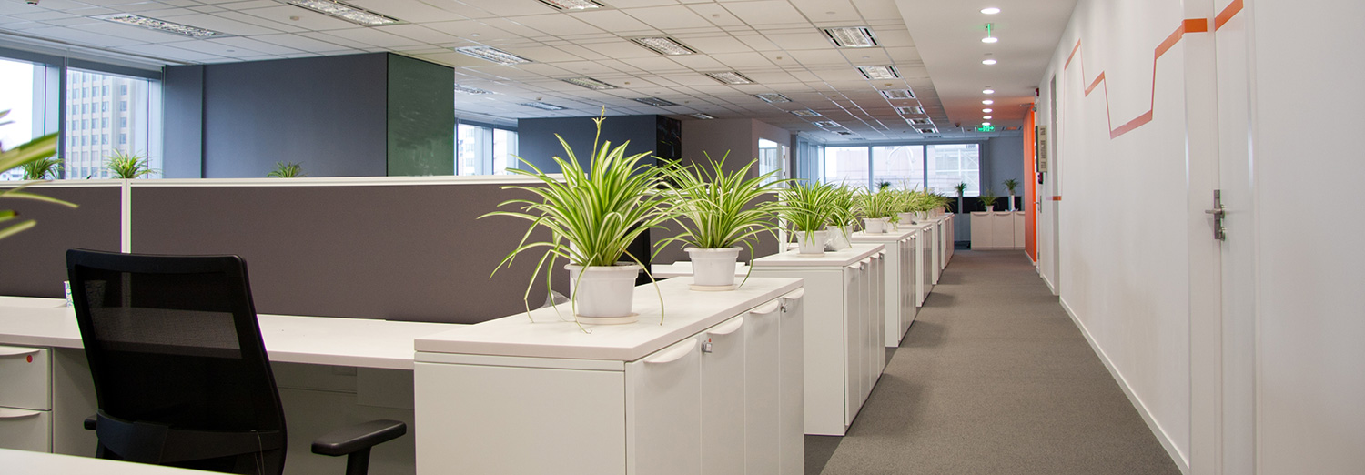 A clean looking office with natural light and some plants